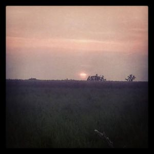 Sunset over the fields